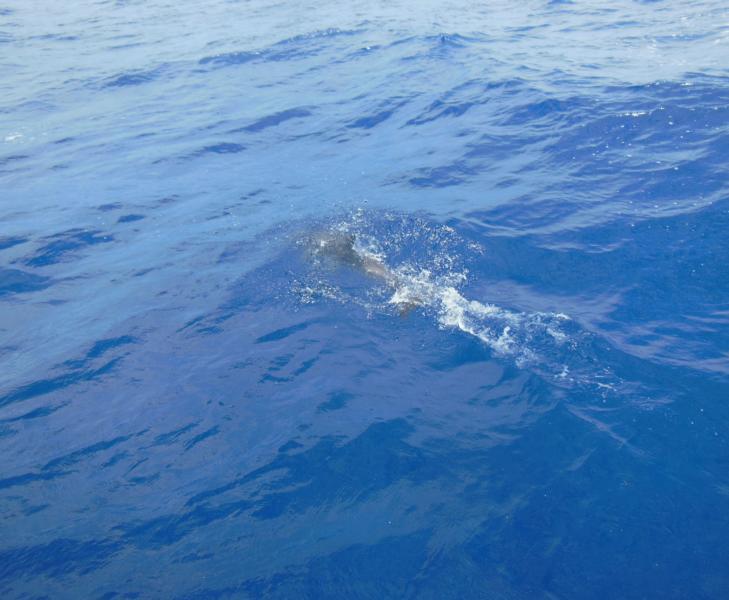 und ein Delphin